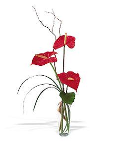 Kahramanmaraş çiçek servisi , çiçekçi adresleri  cam yada mika Vazoda 3 adet  antoryum