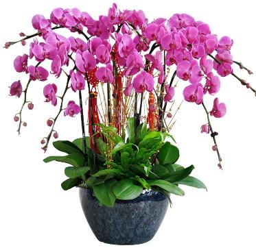 9 dallı mor orkide  Kahramanmaraş çiçek yolla