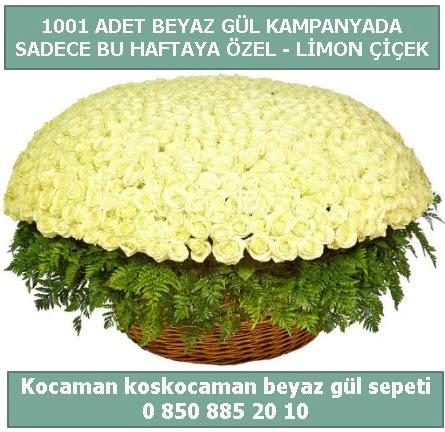 1001 adet beyaz gül sepeti özel kampanyada  Kahramanmaraş çiçek siparişi vermek