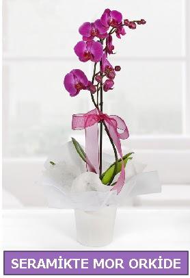 Seramik içerisinde birinci kalite tek dallı mor orkide  Kahramanmaraş internetten çiçek siparişi