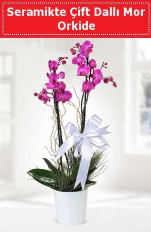 Seramikte Çift Dallı Mor Orkide  Kahramanmaraş çiçek gönderme