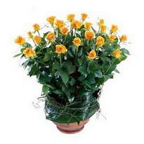 Kahramanmaraş İnternetten çiçek siparişi  10 adet sari gül tanzim cam yada mika vazoda çiçek
