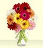 Kahramanmaraş çiçekçiler  cam yada mika vazoda 15 özel gerbera