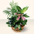 Kahramanmaraş uluslararası çiçek gönderme  5 adet canli çiçek sepette