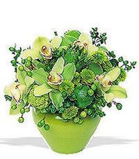 cam yada mika vazoda 5 adet orkide   Kahramanmaraş internetten çiçek satışı