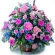 karisik mevsim kir çiçekleri  Kahramanmaraş çiçek siparişi vermek