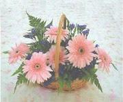 gerbera çiçeklerinde sepet   Kahramanmaraş online çiçek gönderme sipariş