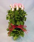 13 adet pembe gül silindirde   Kahramanmaraş online çiçek gönderme sipariş
