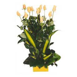 12 adet beyaz gül aranjmani  Kahramanmaraş hediye çiçek yolla