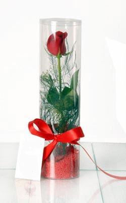 Kahramanmaraş online çiçek gönderme sipariş  Silindir vazoda tek kirmizi gül