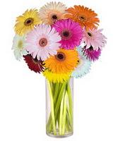 Kahramanmaraş güvenli kaliteli hızlı çiçek  Farkli renklerde 15 adet gerbera çiçegi