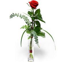 Kahramanmaraş çiçek yolla  Sana deger veriyorum bir adet gül cam yada mika vazoda