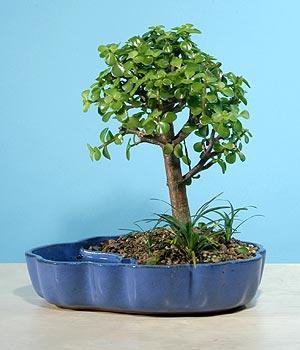 ithal bonsai saksi çiçegi  Kahramanmaraş kaliteli taze ve ucuz çiçekler