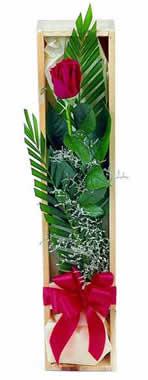 Sade ve gösterisli kutu içerisinde tek gül  Kahramanmaraş çiçek online çiçek siparişi