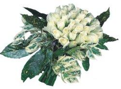 Kahramanmaraş güvenli kaliteli hızlı çiçek  9 Beyaz gül Özel kisiler için