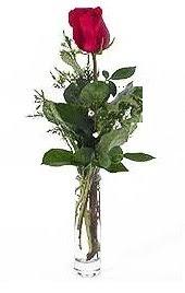 Vazo içerisinde 1 adet kirmizi gül  Kahramanmaraş İnternetten çiçek siparişi