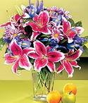 Kahramanmaraş ucuz çiçek gönder  Sevgi bahçesi Özel  bir tercih