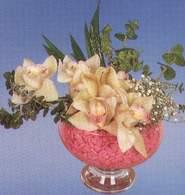 Kahramanmaraş ucuz çiçek gönder  Dal orkide kalite bir hediye