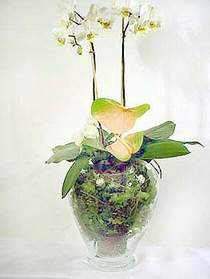 Kahramanmaraş uluslararası çiçek gönderme  Cam yada mika vazoda özel orkideler