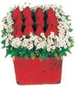 Kahramanmaraş cicek , cicekci  Kare cam yada mika içinde kirmizi güller - anneler günü seçimi özel çiçek
