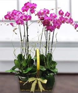 4 dallı mor orkide  Kahramanmaraş çiçekçi mağazası