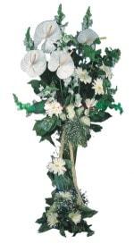 Kahramanmaraş ucuz çiçek gönder  antoryumlarin büyüsü özel