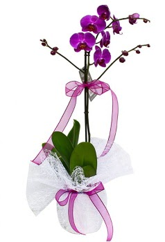 Tek dallı mor orkide  Kahramanmaraş cicekciler , cicek siparisi