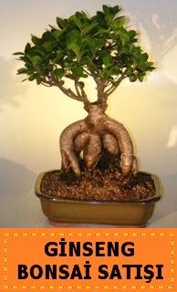 Ginseng bonsai satışı japon ağacı  Kahramanmaraş çiçek yolla , çiçek gönder , çiçekçi