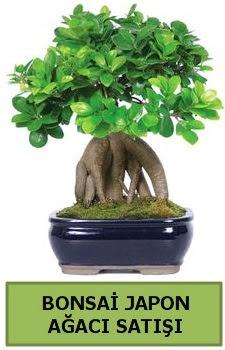Bonsai japon ağacı satışı  Kahramanmaraş uluslararası çiçek gönderme