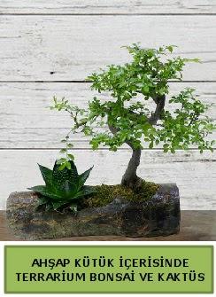 Ahşap kütük bonsai kaktüs teraryum  Kahramanmaraş güvenli kaliteli hızlı çiçek