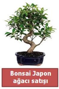 Japon ağacı bonsai satışı  Kahramanmaraş çiçek servisi , çiçekçi adresleri