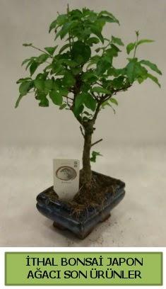 İthal bonsai japon ağacı bitkisi  Kahramanmaraş çiçekçi telefonları