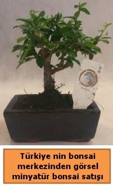Japon ağacı bonsai satışı ithal görsel  Kahramanmaraş online çiçek gönderme sipariş