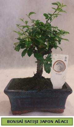 Minyatür bonsai ağacı satışı  Kahramanmaraş cicek , cicekci