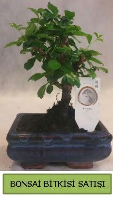 Bonsai ithal görsel minyatür japon ağacı  Kahramanmaraş anneler günü çiçek yolla