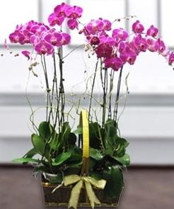 7 dallı mor lila orkide  Kahramanmaraş çiçek siparişi vermek