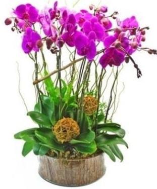 Ahşap kütükte lila mor orkide 8 li  Kahramanmaraş çiçek mağazası , çiçekçi adresleri