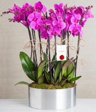 11 dallı mor orkide metal vazoda  Kahramanmaraş çiçek siparişi vermek
