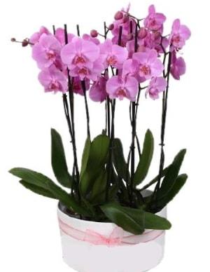 Beyaz seramik içerisinde 7 dallı mor orkide  Kahramanmaraş cicekciler , cicek siparisi
