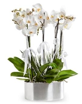 Beş dallı metal saksıda beyaz orkide  Kahramanmaraş online çiçek gönderme sipariş