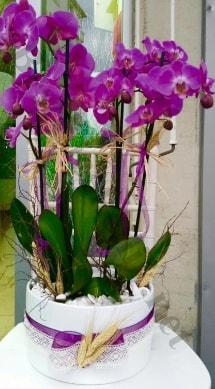 Seramik vazoda 4 dallı mor lila orkide  Kahramanmaraş online çiçekçi , çiçek siparişi