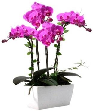 Seramik vazo içerisinde 4 dallı mor orkide  Kahramanmaraş uluslararası çiçek gönderme