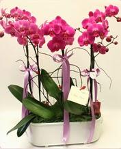 Beyaz seramik içerisinde 4 dallı orkide  Kahramanmaraş anneler günü çiçek yolla
