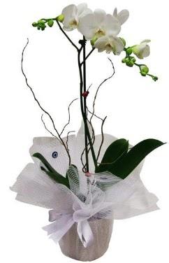 Tek dallı beyaz orkide  Kahramanmaraş çiçek yolla , çiçek gönder , çiçekçi