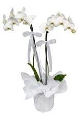 2 dallı beyaz orkide  Kahramanmaraş çiçekçi mağazası