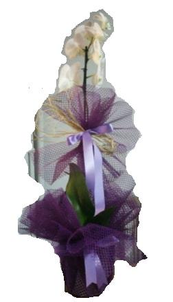Tek dallı beyaz orkide süper kalite ithal  Kahramanmaraş çiçek servisi , çiçekçi adresleri