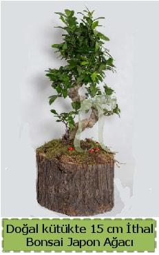 Doğal kütükte İthal bonsai japon ağacı  Kahramanmaraş cicek , cicekci