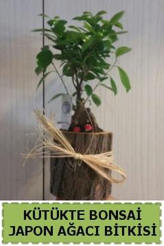 Kütük içerisinde doğal bonsai ağacı  Kahramanmaraş cicekciler , cicek siparisi