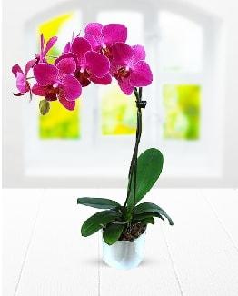 Tek dallı mor orkide  Kahramanmaraş uluslararası çiçek gönderme