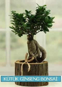 Kütük ağaç içerisinde ginseng bonsai  Kahramanmaraş çiçek siparişi vermek